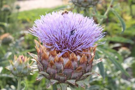 botanischenacht2