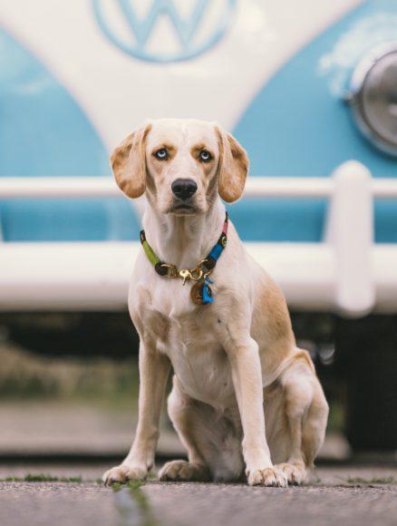 Zehlendorf: ecodog für den Hund