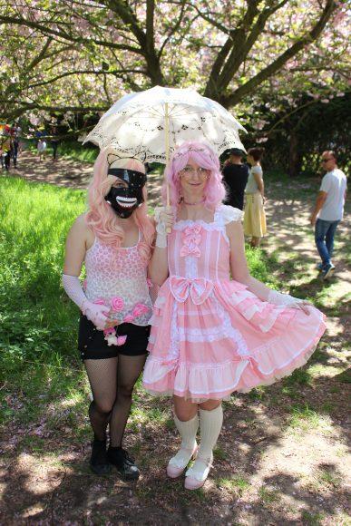 Stadt Teltow und Umweltinitiative sagen Kirschblütenfest ab