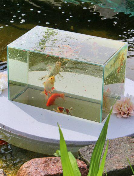 Lichterfelde-Ost: Kristian Bethke erfindet das Flying Aquarium