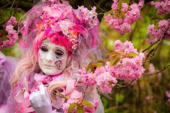 Teltower Kirschblütenfest muss wegen Corona abgesagt werden
