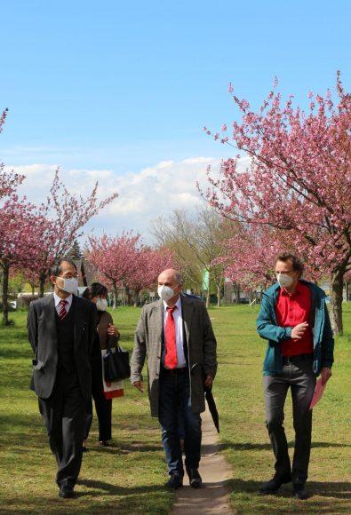 Japanischer Botschafter besucht Teltower Kirschblütenallee